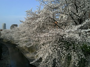 kandagawa1.jpg