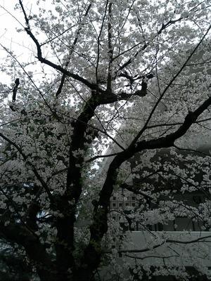 taisouji2.jpg