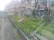 higashinakanosakura1.jpg