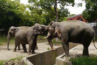 世界一周の動物旅行?!よこはま動物園ズーラシア