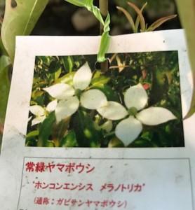 ueki_yamahana