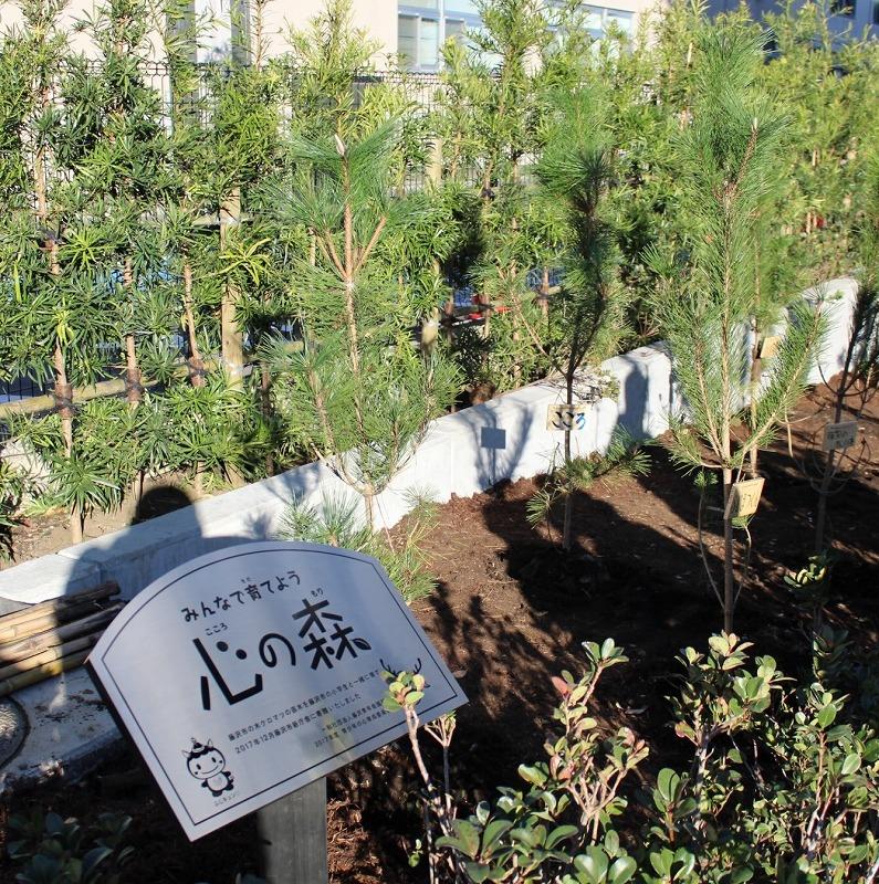 藤沢市役所 新庁舎に「心の森」が完成しました