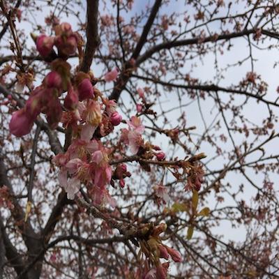 一足お先に春を満喫