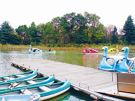 千葉県立柏の葉公園 | リビングかしわWeb