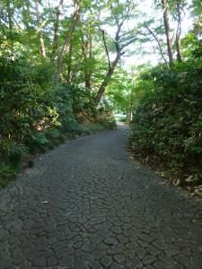 滄浪泉園 道