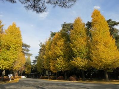 秋のくにたち銀杏並木散歩&クリスマス イルミネーション案内