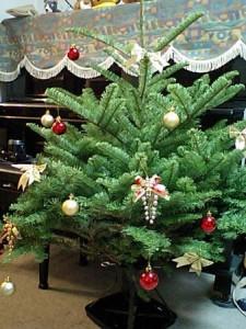 IKEA 生のもみの木