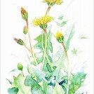 【5/13~】季節の水彩はがき絵(2回)