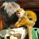 60周年の大宮公園小動物園は入場無料、スタンプラリーも楽しめます