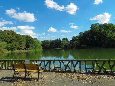 芸術の秋!善福寺池で「野外アート」を満喫しませんか?