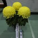 日本一の菊作り