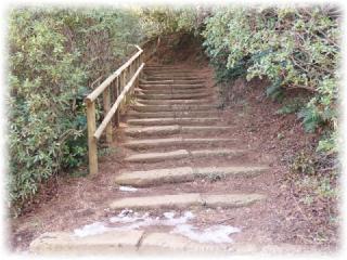 コチラの階段を上って梅園へ