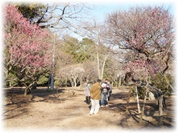 古木が多く「冬至」を中心に「八重寒紅」「八重野梅」などを観賞できます
