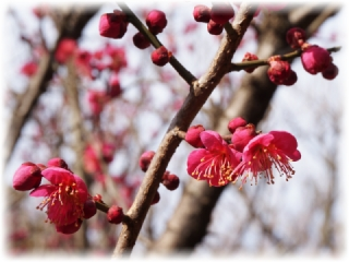 梅の花アレコレ