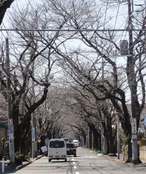 桜トンネル_冬