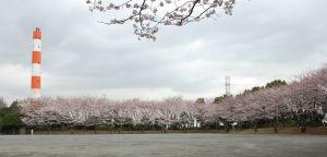 桜_東方公園