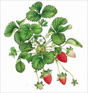 受付終了【5/7~】植物を描く~ボタニカルアート水曜教室 (6回)