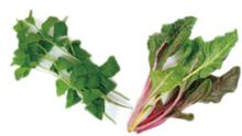 進化する ハマ野菜、もう食べた?