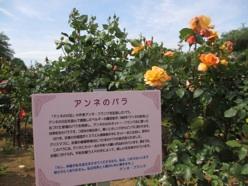 1405_rosefes5