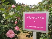 1405_rosefes6