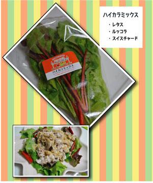 ハイカラ野菜7