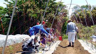 親子でジャガイモ掘りしよう! NPO法人たがやす・学童体験農園「小野路農園クラブ」