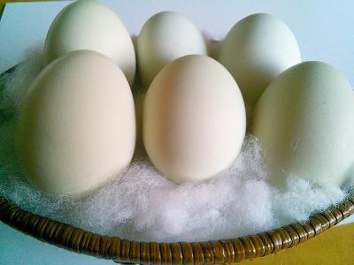 知ってる?夏バテ・老化防止に効く「青い卵」!卵パワーで夏を乗りきるっ!