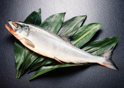 鮭の種類を知る