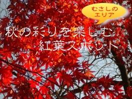 むさしのエリアの紅葉を見に行こう♪