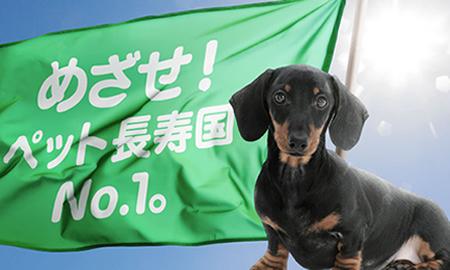 家族の一員、愛犬・愛猫の健康寿命を延ばす基礎知識