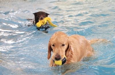 冬も泳げるドッグプール&ドッグラン付きホテル「里杏」・日帰り利用もOK