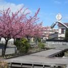 江川せせらぎ遊歩道は、河津桜の咲く散歩道