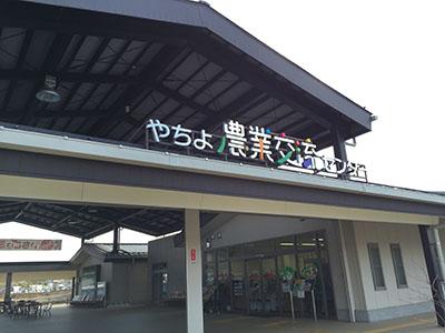 shimadaichigo_01