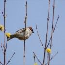 小鳥たちのラブソングを聴こう~大和の「泉の森」