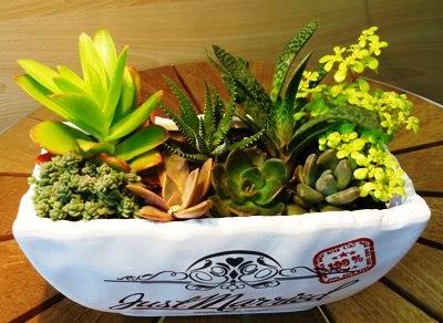 ニーズセンター花の家「多肉植物寄せ植え講習会」参加者募集!