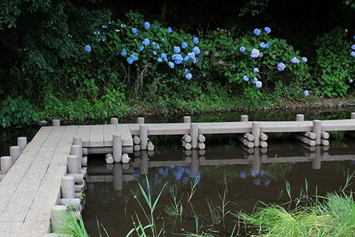 アジサイと水辺と。我孫子市・高野山桃山公園へ上野東京ラインで