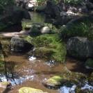 紅葉シーズンも楽しみ!駅から10分の避暑地!大田黒公園@荻窪