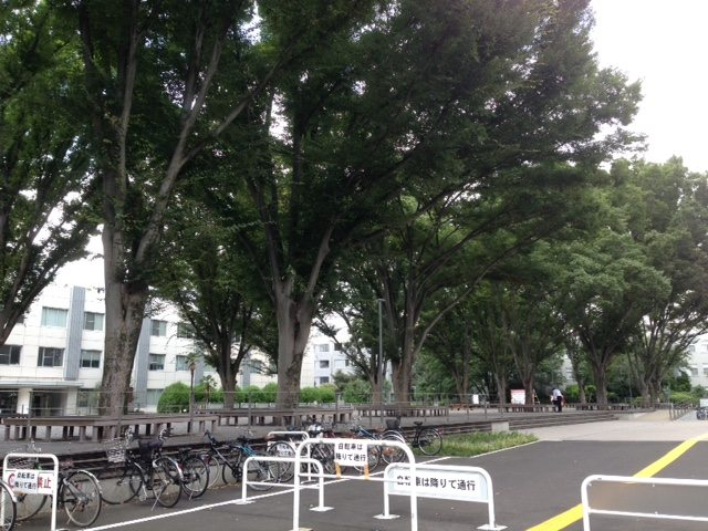 notecafe図書館前の林・