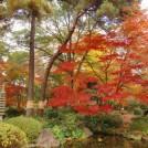 見ごろはまだだけど、ひと足早く大宮公園の紅葉の見所をご紹介します!