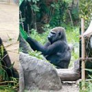 【Ooedo LIVING】年間の入園者数が日本一多い人気の動物園