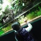美しいアートアクアリウム!池袋・サンシャイン水族館