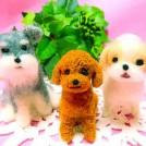 羊毛フェルトで愛犬を作ろう(1回)
