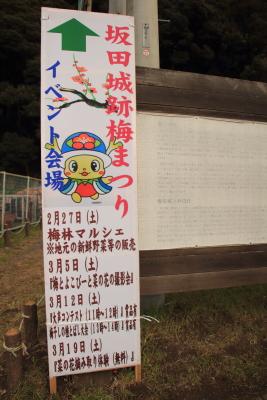 千葉最大級1000本の梅、樹齢50年...