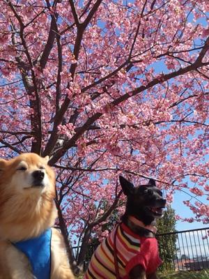 ペットと撮影するときは、ローアングルから狙うと空の色も映えます