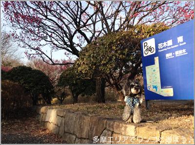 昭和記念公園の梅2016