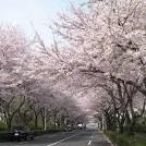 香りから食まで~桜の癒し効果で旬の桜をまるごと満喫しよう