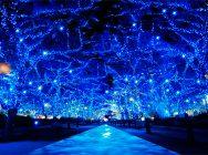 青の洞窟 SHIBUYA~渋谷でおしゃれにパスタ&イルミネーション【あなたの街の愛されパスタ】