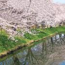 つくば市、つくばみらい市、守谷市で、春を先取り!