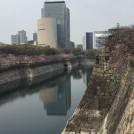 桜開花情報★「大阪城公園」ではお花見はもちろん御座船の遊覧もおススメ