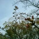 桜開花情報★伊丹「昆陽池公園」もちらほら咲いてきましたよ♪